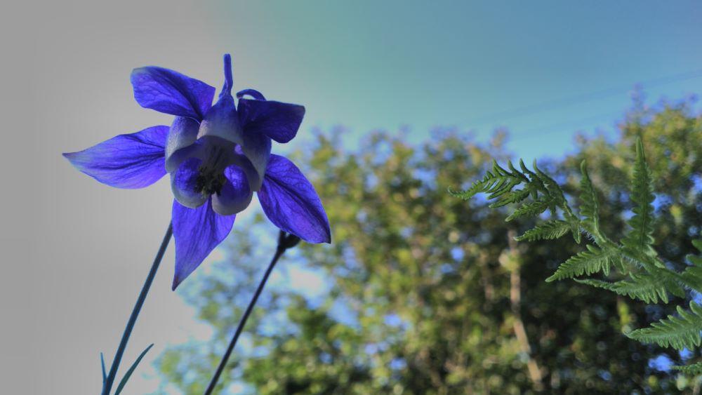 A flor no seu mellor momento