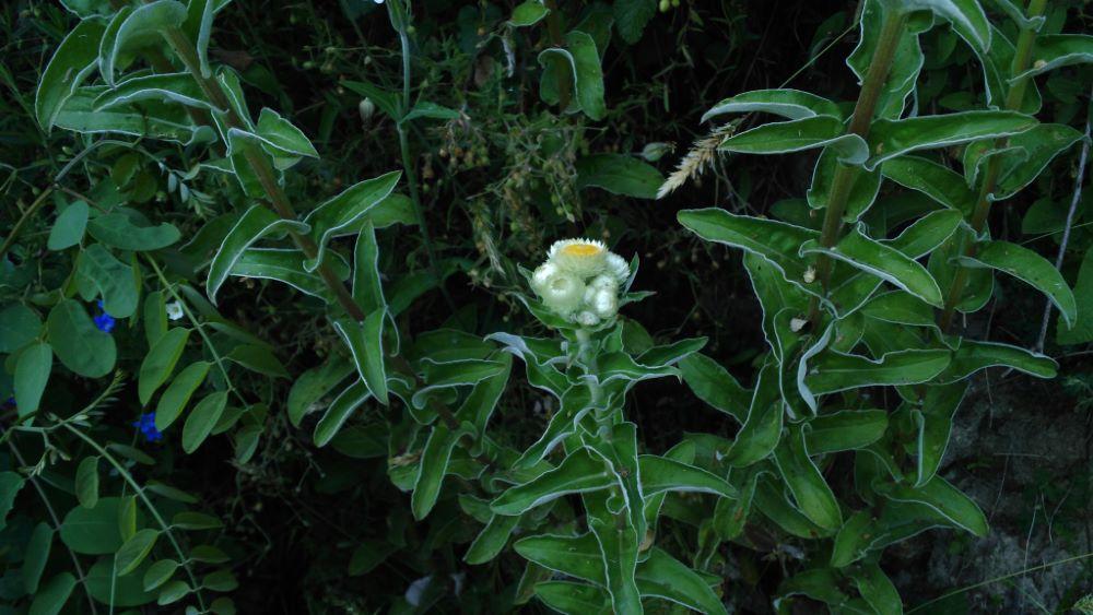 Comenzando la floración
