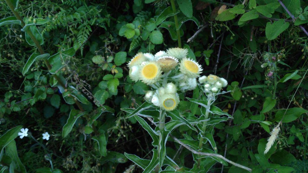 Floración