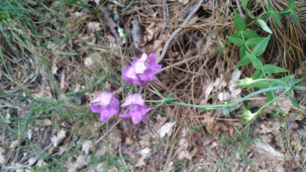 Paxariños en flor
